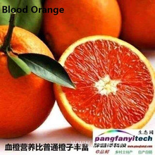 Nutritional Fresh  Sour-sweet Tasty  Blood Orange