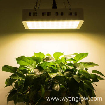The Best 600w grow plant light