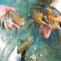 Reinforced Multi-function Clip Anti-slip Tool Clip Sea Crab Artifact Crab Tongs Kitchen Gadget Stainless Steel Crab Tongs