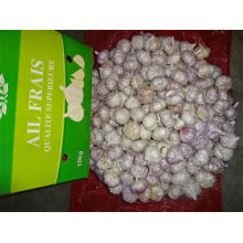 Hot Sale New Crop Garlic