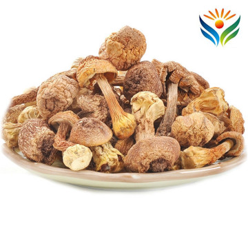 Agaricus Blazei Murill Mushroom Quality Dehydrated Dry Food Tricholoma Matsutake