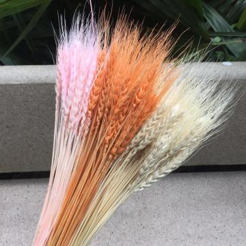 100pcs/lot,Natural dried Ear of Wheat flower bouquet,Eternal display Bunch for Wedding Party Home Decoration,Flower arrangement