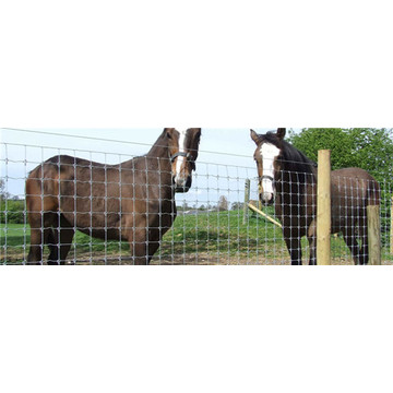 farm animal cattle filed sheep horse mesh fence
