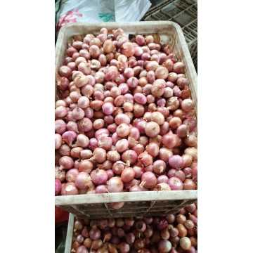 Export Stand Fried Onion Crispy Fried Shallot Myanmar Onion Material