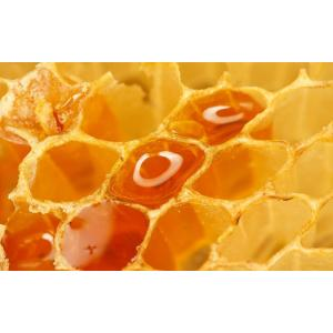 bulk sale raw sunflower honey