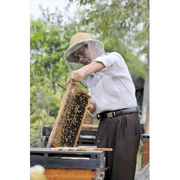 High quality 100% pure bee Litchi honey