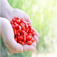 Ningxia High Quality Bulk Wholesale  goji berry/wolfberry