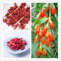 Other Dried Goji Berry