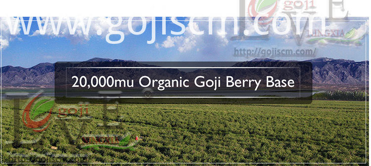 GOJI BERRY for Skin base