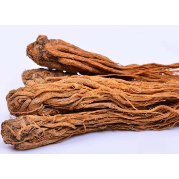 Angelica root essential oil in a beauty salon