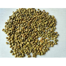Green Coffee Bean Extract Total Chlorogenic Acids 50%