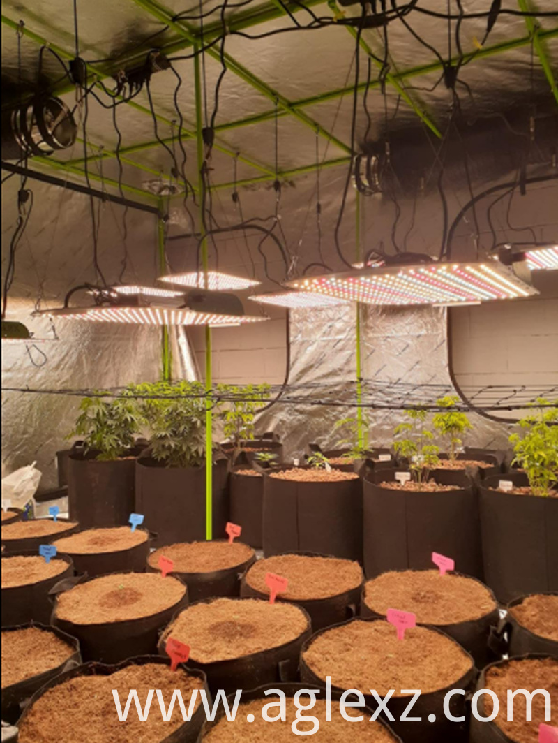 aglex k2000 grow light