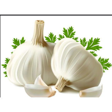 2020 New Crop Pakistan/Bangladesh Favorite Garlic
