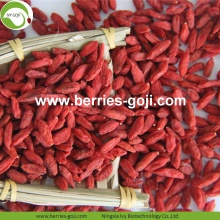 Factory Supply Fruit Healthy Nutrition Goji Berries