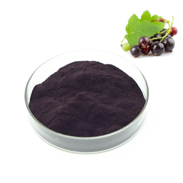 Top value organic black currant extract powder