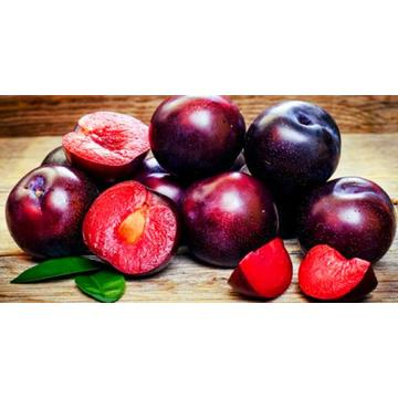 fresh new crop sweet plum