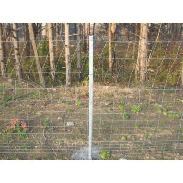 Electro galvanized cattle fence/ filed fence