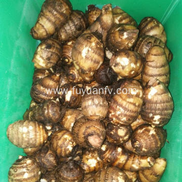 Best price hot  sale fresh taro