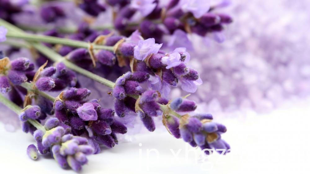 Lavender Essential Oil Benefits