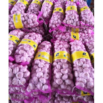 Fresh Garlics Wholesale with Good Price