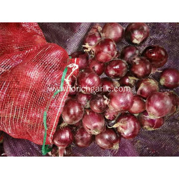 Fresh Red Onion Best Quality