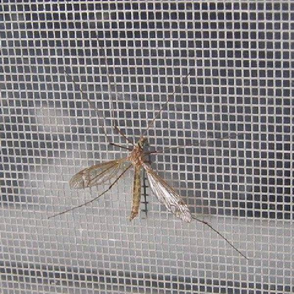 glassfiber insect screen