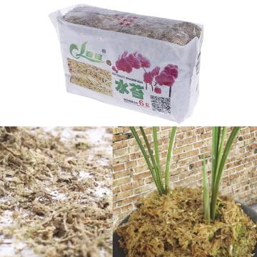 New 6L Moss Sphagnum Moisturizing Nutrition Organic Fertilizer For Orchid Phalaenopsis Sphagnum Moss Garden Supplies