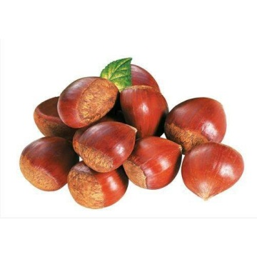 2020 Good Quality New Crop Chestnut