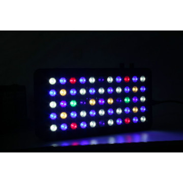 Best LED Aquarium Lighting for Reef Aquariums