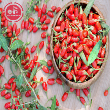 Tonic Herb Tastes Great Low pesticide Goji Berries