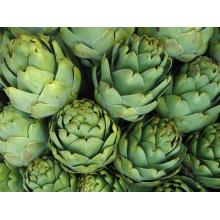 Artichoke Extract Cinnamic acid 0.25%-15%