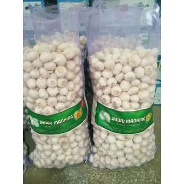 2020 New Crop Pure White Garlic