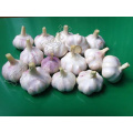 Normal White Garlics Wholesale With Good Price