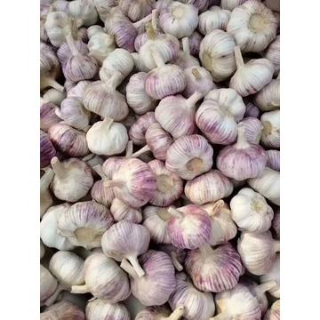 wholesale cheap fresh selected good quality garlic