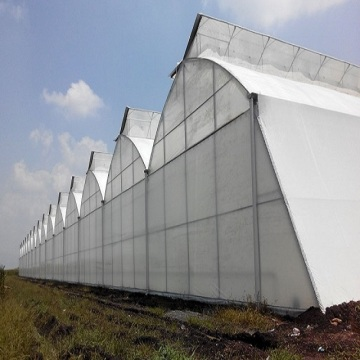 Tunnel Plastic Film Greenhouse For Growing Vegetables
