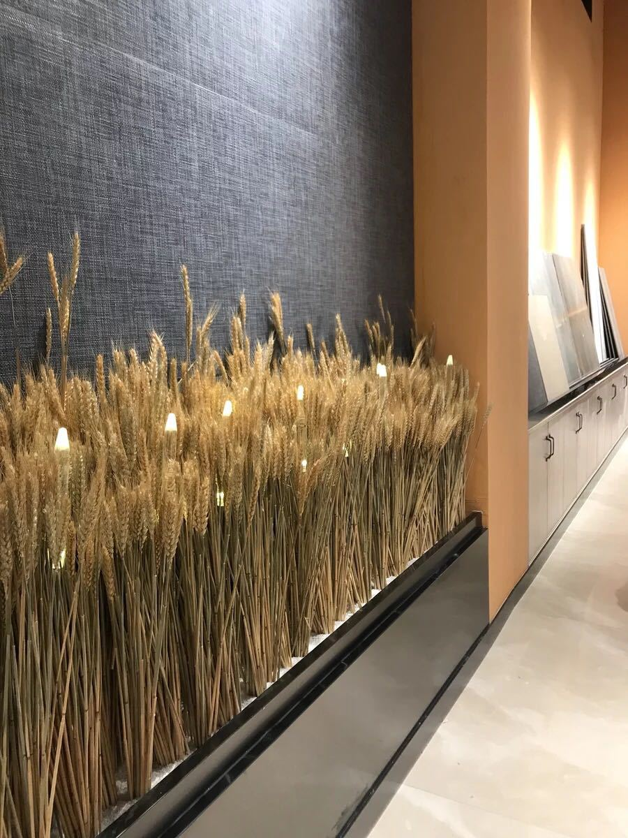 50ps Natural Wheat Ear Wheat Rice Ear Farmhouse Opening Barley Real Dried Flower Bouquet Pastoral Dry Branch Gift Shooting Road