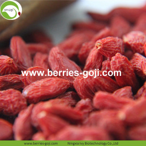 Buy Natural Nutrition Anti Cancer Lycium Berry