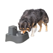 Cat and Dog Drinking Fountain