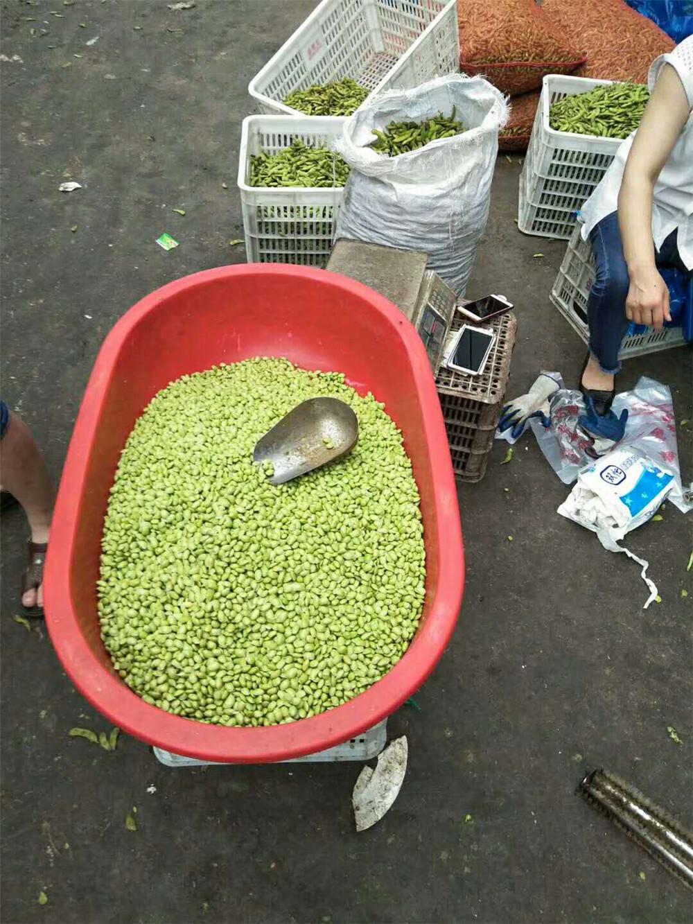 Green bean pea sheller1