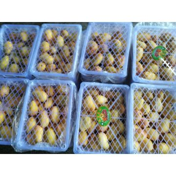 African Mango Seed Extract Irvingia Gabonensis L.Extract
