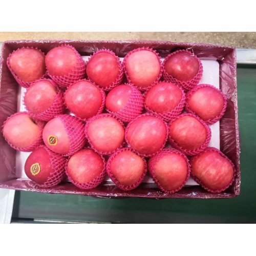 Good Quality 2020 Year New Crop FUJI Apple
