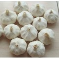 fresh Chinese new crop pure white garlic