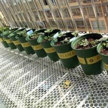 0.8/1.2/1.8cm Hole Flower Pot Leakproof Mesh Pad Gasket Home Bonsai Soil Planting Net Bottom Grid Mat Garden Supplies Netting