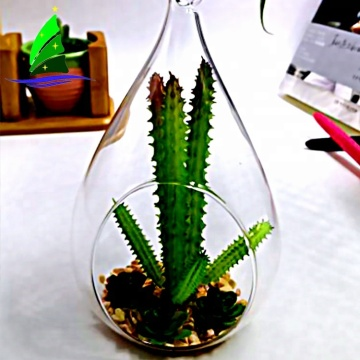 teardrop shaped glass terrarium for air plants