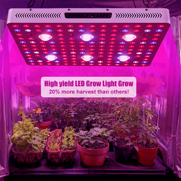 Vegetable Grow Lights 3000w Planting