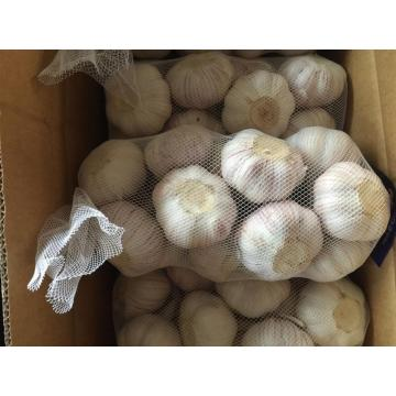 White Super New Garlic