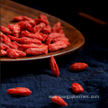 Bulk Wholesale Goji Berries