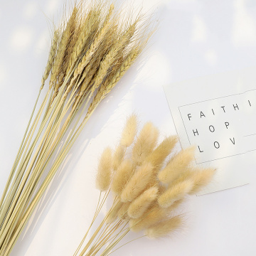 10/30PCS Natural Dried Flowers Small Pampas Grass Phragmites Natural Wheat Wedding Home Decoration Real Plant