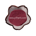 Manufacter supply blueberry extract 25% anthocyanin powder