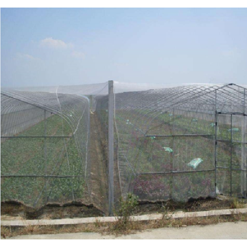 Insect Screen Wire  Netting
